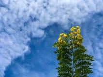 Τα λουλούδια καλύπτουν το κίτρινο πρωί μπλε ουρανού στοκ εικόνα
