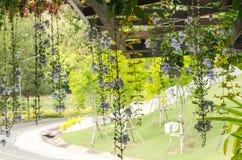 Τα λουλούδια κρεμούν από τη στέγη Στοκ φωτογραφία με δικαίωμα ελεύθερης χρήσης
