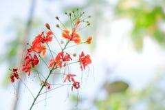 Τα λουλούδια κλείνουν επάνω απομονωμένος για το υπόβαθρο Στοκ εικόνα με δικαίωμα ελεύθερης χρήσης