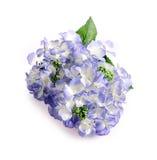 Τα λουλούδια κλείνουν επάνω για το υπόβαθρο Στοκ φωτογραφία με δικαίωμα ελεύθερης χρήσης