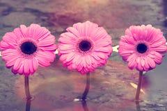 τα λουλούδια οδοντώνουν τρία Στοκ εικόνα με δικαίωμα ελεύθερης χρήσης
