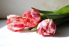 τα λουλούδια οδοντώνουν τρία Στοκ φωτογραφία με δικαίωμα ελεύθερης χρήσης