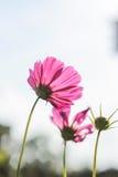 τα λουλούδια οδοντώνουν τρία Στοκ Φωτογραφία