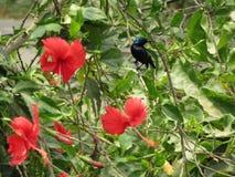τα λουλούδια πουλιών που τίθενται το διάνυσμα αυτοκόλλητων ετικεττών Στοκ Εικόνες