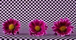 Τα λουλούδια σε ένα σκάκι στοκ φωτογραφίες