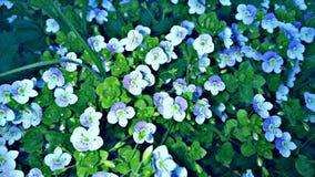 Τα λουλούδια στον κήπο Βλάστηση Στοκ Φωτογραφία