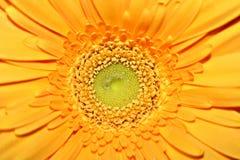 Τα λουλούδια στον κήπο Βλάστηση Στοκ εικόνες με δικαίωμα ελεύθερης χρήσης