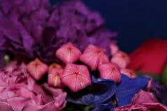 Τα λουλούδια στον κήπο Βλάστηση Στοκ φωτογραφία με δικαίωμα ελεύθερης χρήσης