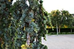 Τα λουλούδια στον κήπο Βλάστηση Στοκ φωτογραφίες με δικαίωμα ελεύθερης χρήσης