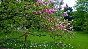 Τα λουλούδια στον κήπο Βλάστηση Στοκ Εικόνα