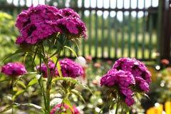 Τα λουλούδια στον κήπο μετά από τη βροχή Στοκ φωτογραφία με δικαίωμα ελεύθερης χρήσης