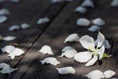 Τα λουλούδια της Apple στην ξύλινη επιτραπέζια επιφάνεια έπεσαν από τον αέρα Στοκ Εικόνες