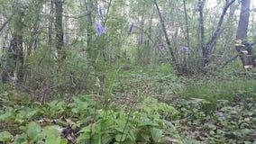 Τα λουλούδια του δάσους Στοκ Εικόνες