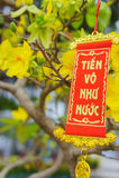 Τα λουλούδια του παραδοσιακού βιετναμέζικου νέου έτους Στοκ φωτογραφία με δικαίωμα ελεύθερης χρήσης