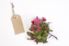 Τα λουλούδια του Apple-δέντρου του niedzwetzkyana Dieck Nedzvetsky Malus και της ετικέττας στο οποίο μπορείτε να γράψετε απομονωμ Στοκ φωτογραφία με δικαίωμα ελεύθερης χρήσης