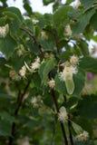 τα λουλούδια το δέντρο Στοκ εικόνες με δικαίωμα ελεύθερης χρήσης
