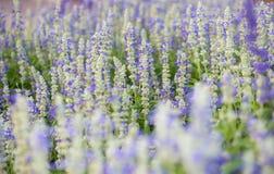 τα λουλούδια χρωμάτων καλλιεργούν ενωμένος Στοκ Εικόνα