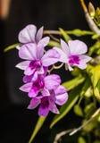 τα λουλούδια χρωμάτων καλλιεργούν ενωμένος Στοκ Εικόνες