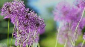 τα λουλούδια χρωμάτων καλλιεργούν ενωμένος απόθεμα βίντεο