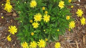 τα λουλούδια χρωμάτων καλλιεργούν ενωμένος Στοκ εικόνες με δικαίωμα ελεύθερης χρήσης