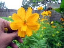 τα λουλούδια χρωμάτων καλλιεργούν ενωμένος Στοκ εικόνα με δικαίωμα ελεύθερης χρήσης