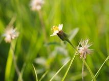 Τα λουλούδια χλόης στον κήπο Στοκ εικόνες με δικαίωμα ελεύθερης χρήσης
