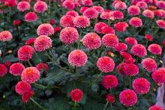 Τα λουλούδια Στοκ εικόνες με δικαίωμα ελεύθερης χρήσης