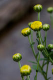 Τα λουλούδια Στοκ φωτογραφία με δικαίωμα ελεύθερης χρήσης