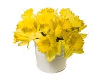 Τα λουλούδια Daffodil σε ένα λευκό μπορούν Στοκ φωτογραφίες με δικαίωμα ελεύθερης χρήσης