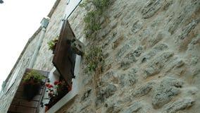 Τα δοχεία των κόκκινων λουλουδιών και των εγκαταστάσεων στέκονται στο παράθυρο απόθεμα βίντεο