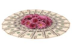 τα δολάρια κεντρικών κύκλων ανασκόπησης ανθίζουν το λευκό Στα κεντρικά λουλούδια Στοκ φωτογραφία με δικαίωμα ελεύθερης χρήσης