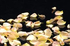 τα πέταλα αυξήθηκαν Στοκ φωτογραφία με δικαίωμα ελεύθερης χρήσης