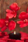 τα πέταλα κεριών αυξήθηκαν Στοκ φωτογραφίες με δικαίωμα ελεύθερης χρήσης
