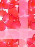 τα πέταλα λουλουδιών α&upsil Στοκ Εικόνα