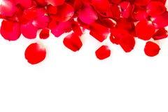 τα πέταλα ανασκόπησης κόκκινα αυξήθηκαν λευκό Στοκ εικόνες με δικαίωμα ελεύθερης χρήσης