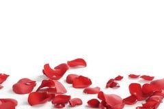 τα πέταλα ανασκόπησης κόκκινα αυξήθηκαν λευκό Στοκ φωτογραφίες με δικαίωμα ελεύθερης χρήσης