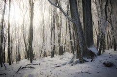 Τα παγωμένα δέντρα στο δάσος κερδίζουν το χειμώνα με να λάμψουν ήλιων Στοκ Φωτογραφία