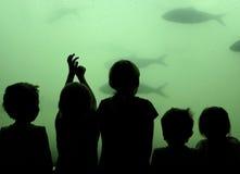 τα παιδιά αλιεύουν το ρολόι Στοκ εικόνες με δικαίωμα ελεύθερης χρήσης