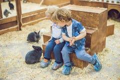 Τα παιδιά παίζουν με τα κουνέλια στο petting ζωολογικό κήπο Στοκ Φωτογραφία