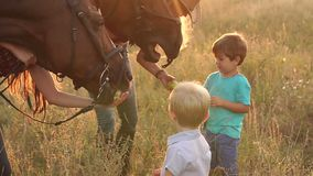 Τα παιδιά ταΐζουν τα μήλα αλόγων στον τομέα, σε αργή κίνηση φιλμ μικρού μήκους