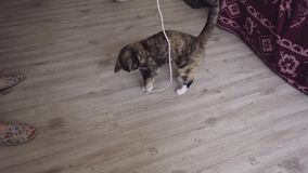 Τα παιχνίδια γατών με ένα σχοινί απόθεμα βίντεο