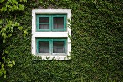 Τα παράθυρα και οι τοίχοι καλύπτονται με τον κισσό φαίνονται κομψοί και κλασικοί Στοκ Φωτογραφίες