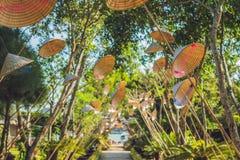 Τα παραδοσιακά καπέλα της γυναίκας του Βιετνάμ ` s Ο δημοφιλέστερος της γυναίκας του Βιετνάμ ` s Στοκ Εικόνα