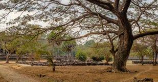 Τα παλαιά δέντρα του ναού Angkor Wat, Siem συγκεντρώνουν, Καμπότζη Στοκ φωτογραφία με δικαίωμα ελεύθερης χρήσης