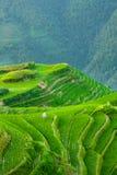 Τα πεζούλια ρυζιού στην Κίνα Στοκ Φωτογραφίες