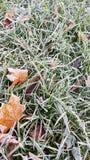 Τα πεσμένα φύλλα στην πράσινη χλόη με τον άσπρο παγετό, αφαιρούν το φυσικό υπόβαθρο Παγωμένο φύλλωμα στο έδαφος Πρώτος παγετός Πά στοκ εικόνες με δικαίωμα ελεύθερης χρήσης