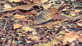 Τα πεσμένα φύλλα Στοκ εικόνες με δικαίωμα ελεύθερης χρήσης