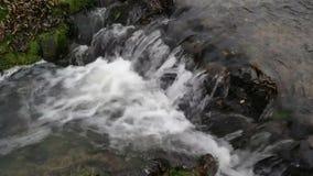 Τα πετώντας σύννεφα απεικονίζονται στο νερό ενός μικρού βαλτώδους streamlet που ρέει στη λίμνη απόθεμα βίντεο