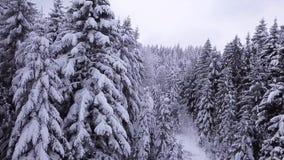 Τα πεύκα είναι χιονισμένα εναέρια όψη απόθεμα βίντεο