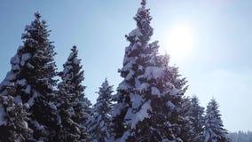 Τα πεύκα είναι χιονισμένα επάνω από την όψη εναέρια όψη φιλμ μικρού μήκους
